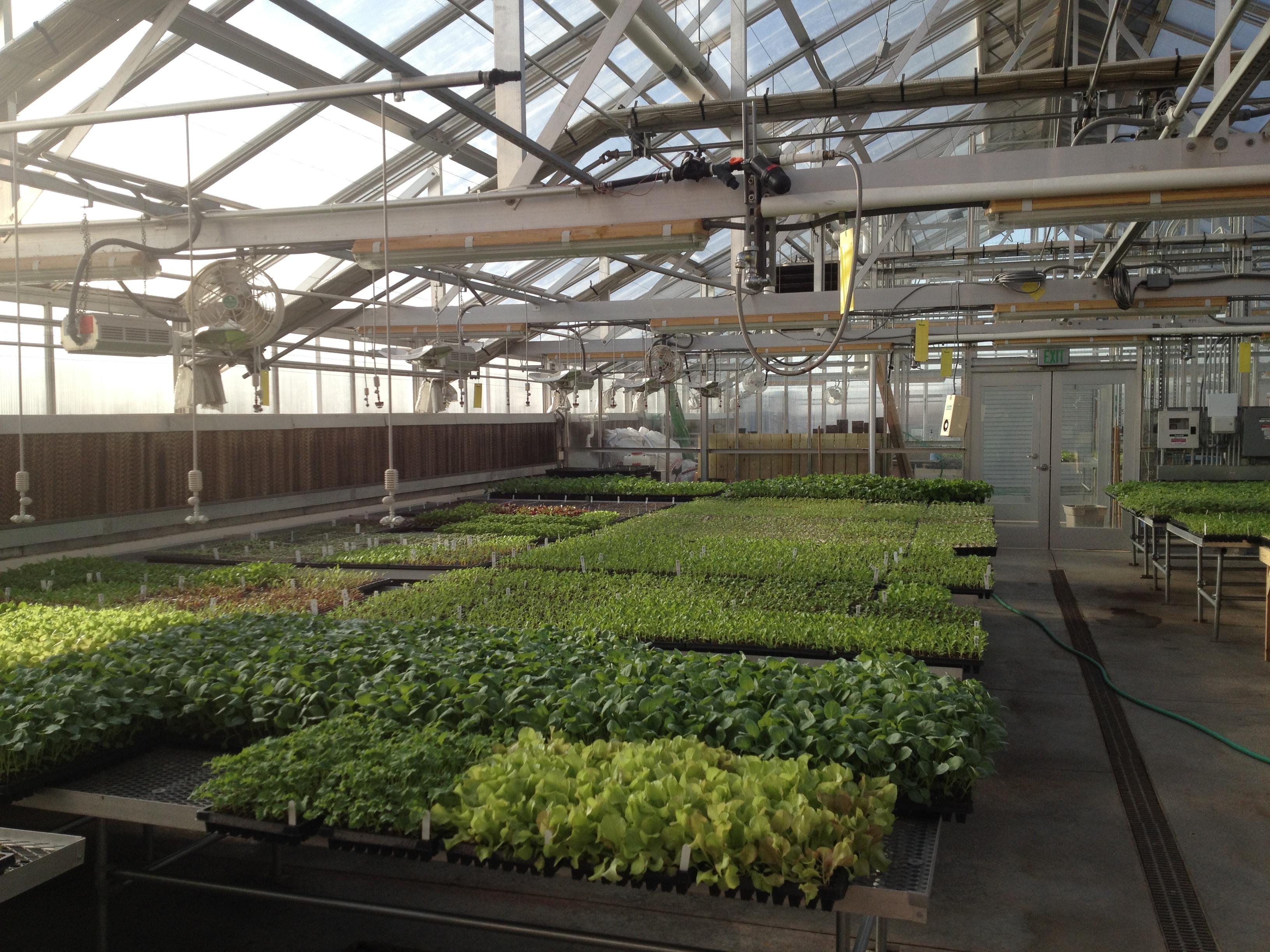 tchs seedlings_mar2014